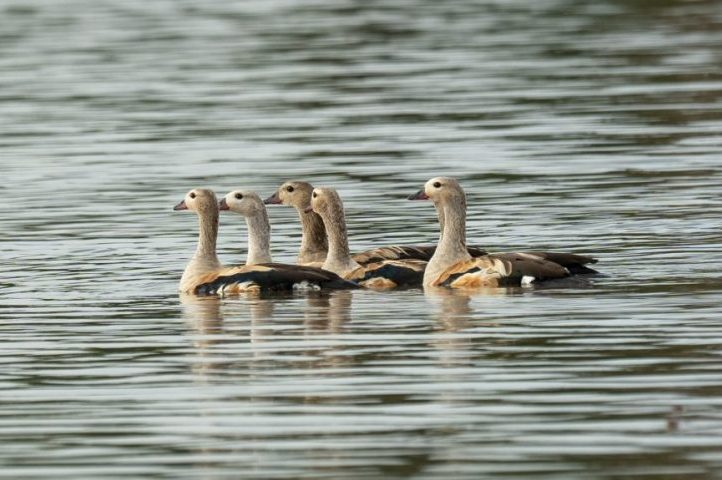 Birdwatching and wildlife tours in Colombia